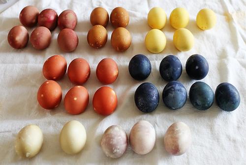 Eggexperiment